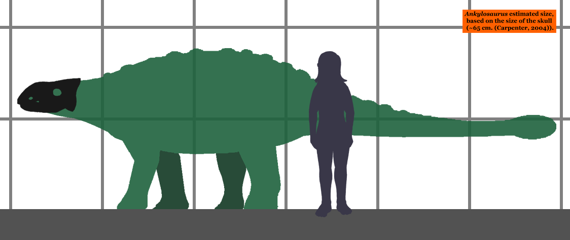 Ankylosaurus_estimated_size_01