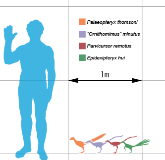 Smallest_theropods_scale_mmartyniuk
