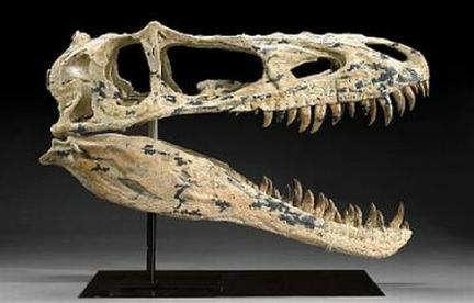 Quanto erano grandi i dinosauri?